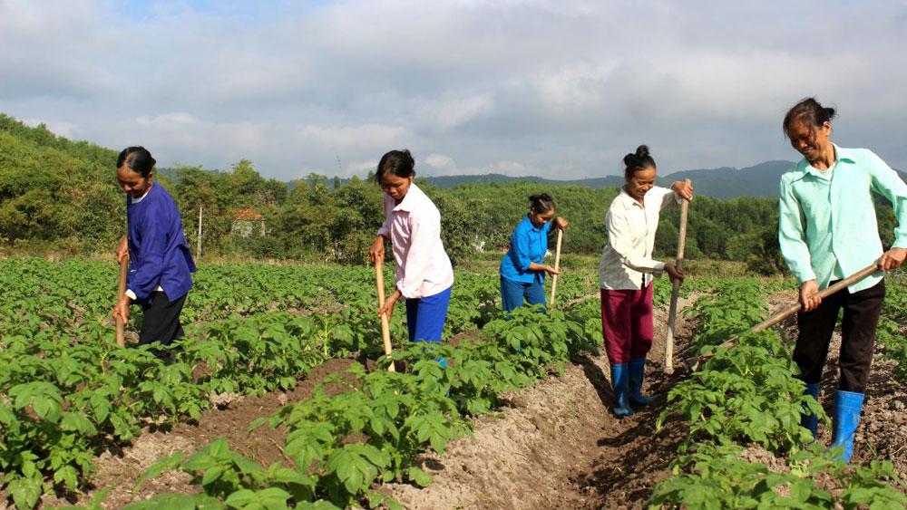 Bắc Giang: Tăng cường hỗ trợ nông dân phát triển sản xuất